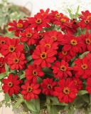 14993267842825_profusion-red-1.jpg