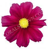 15611701893895_violet.jpg