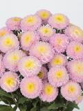 15904817742192_bonita-shell-pink-web.jpg